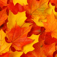 Fall Leaves Jigsaw Puzzle