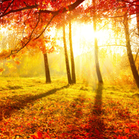 Fall Sunrise Jigsaw Puzzle